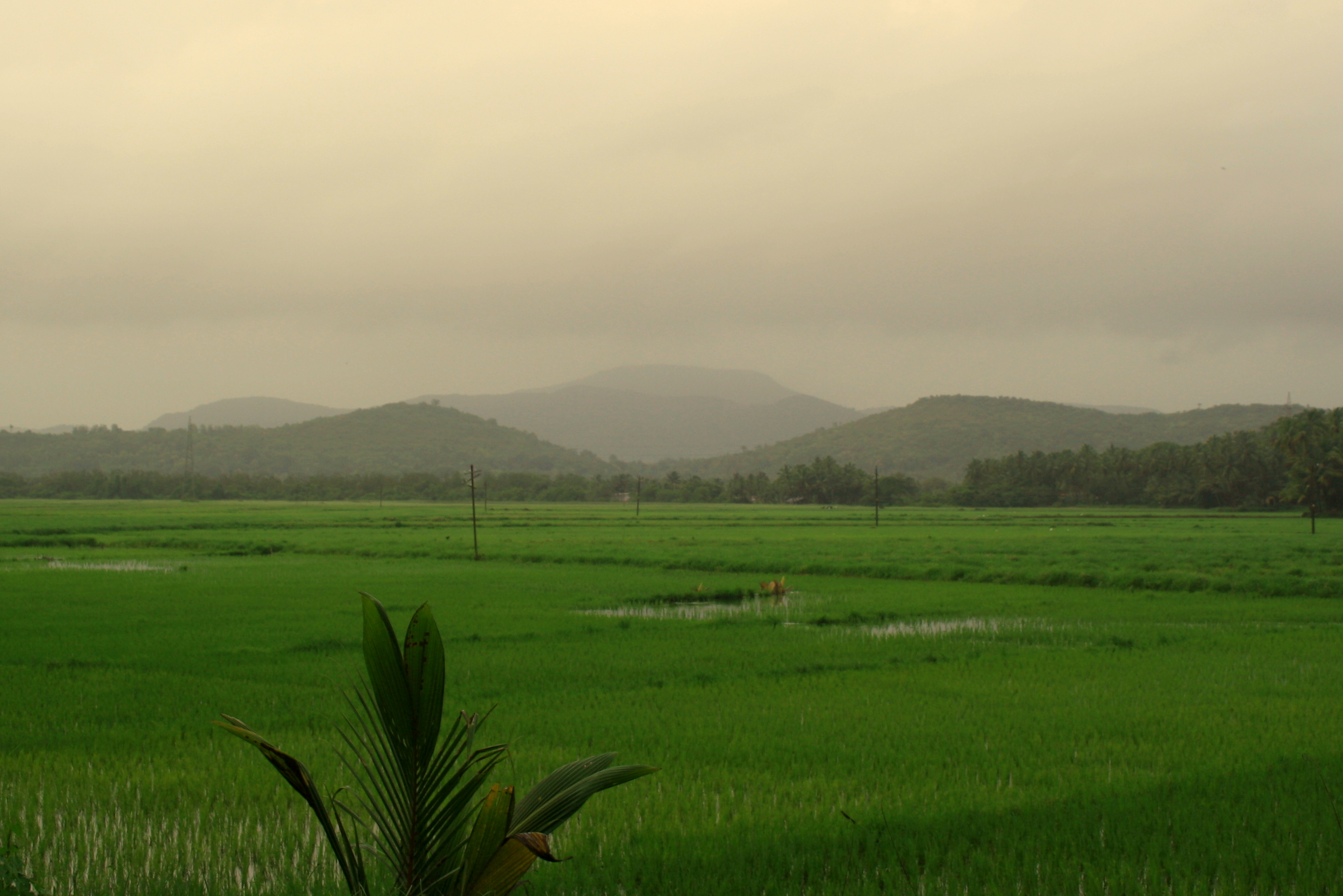 agriculture in goa Goa / o / ( the soil is rich in minerals and humus, thus conducive to agriculture some of the oldest rocks in the indian subcontinent are found in goa between molem and anmod on goa's border with karnataka.