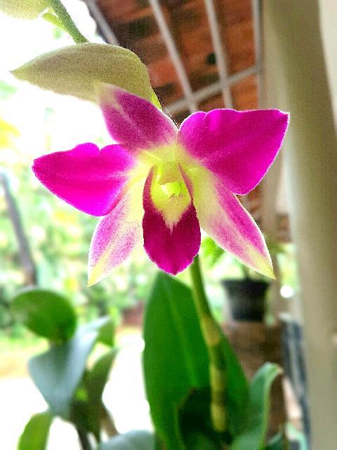Goan Flowers